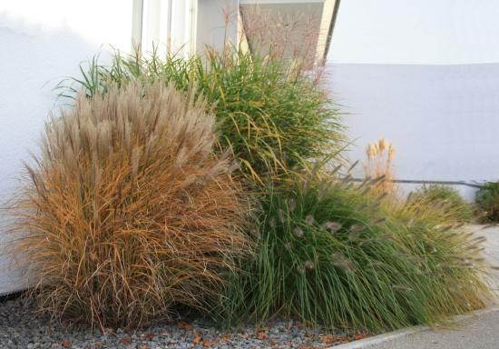 Gräser in fachgerechter Kombination