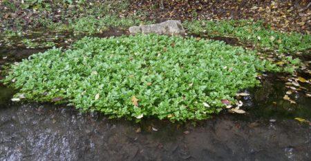 Pflanzen im Filterteich