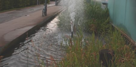 So ungeschützt sollte ein Teich nicht sein. Ein Teich direkt neben einem Weg auf dem Kinder mit Fahrrädern fahren, spielen und dadurch leicht in das Wasser fallen können. Ein Zaun oder eine Gittersicherung wäre hier dringend notwendig.