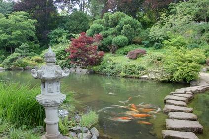 Asiatische wasserg rten harmonie und meditation im for Zierfische im teich