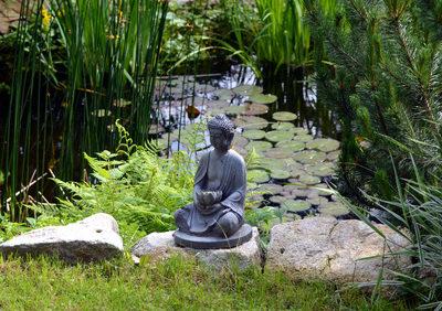 Flachwasserzone im Gartenteich