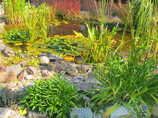 Dieser Gartenteich weist einen gut strukturierten und nicht mit zu vielen Pflanzenarten überfrachteten Aufbau auf