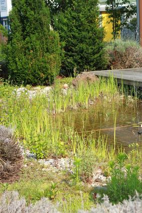 Hier nehmen die Gräser den größten Teil der Freiwasserzone in Besitz