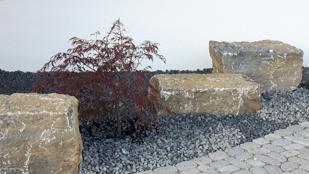 Bergahorn als Teichumfeld Pflanze