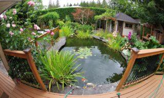 Teichpflege im Jahr