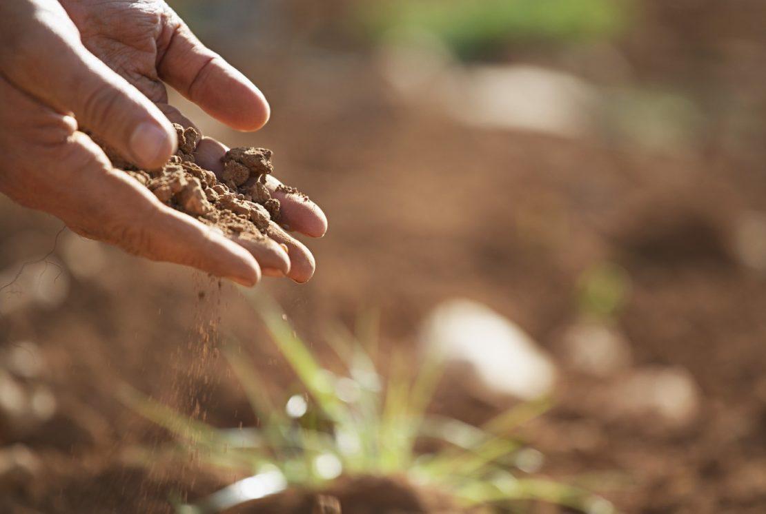 Optimale Seerosen Pflanzerde