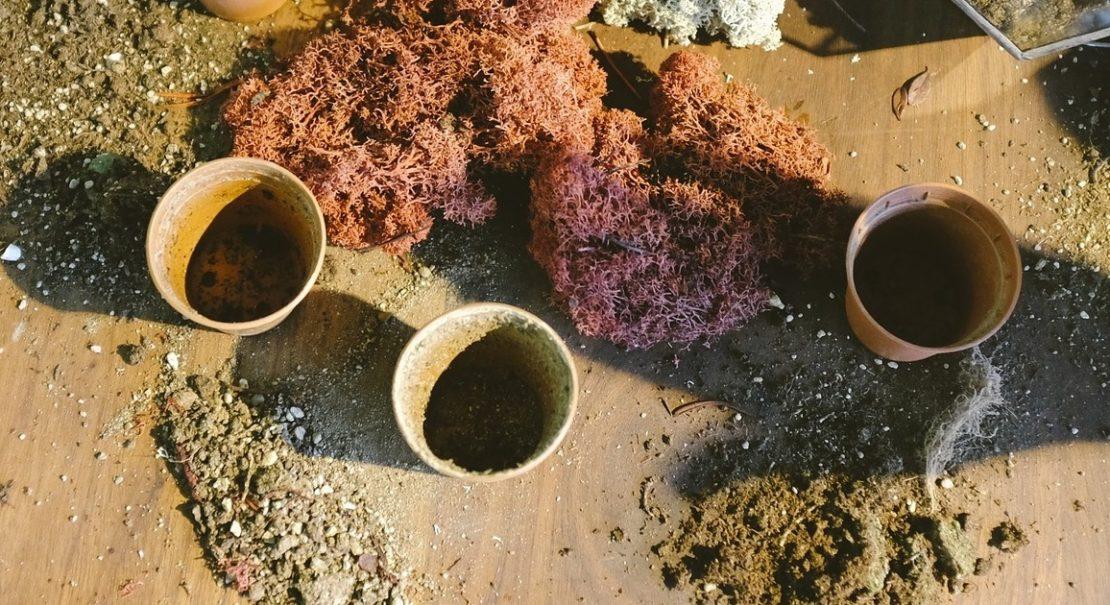 Seerosen Rhizom einpflanzen - So gehts
