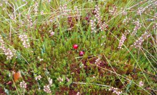 Moorbeetpflanzen - Liste