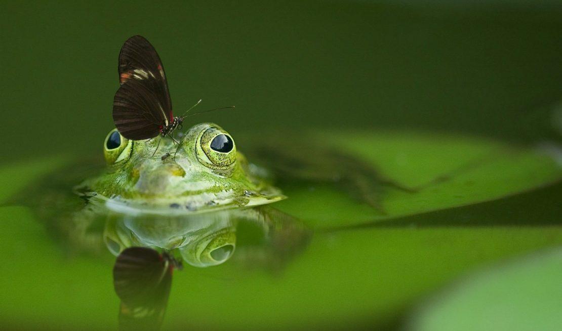 pH-Wert im Teich senken
