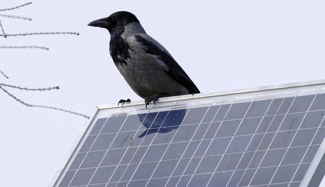 Solar Teichfilter