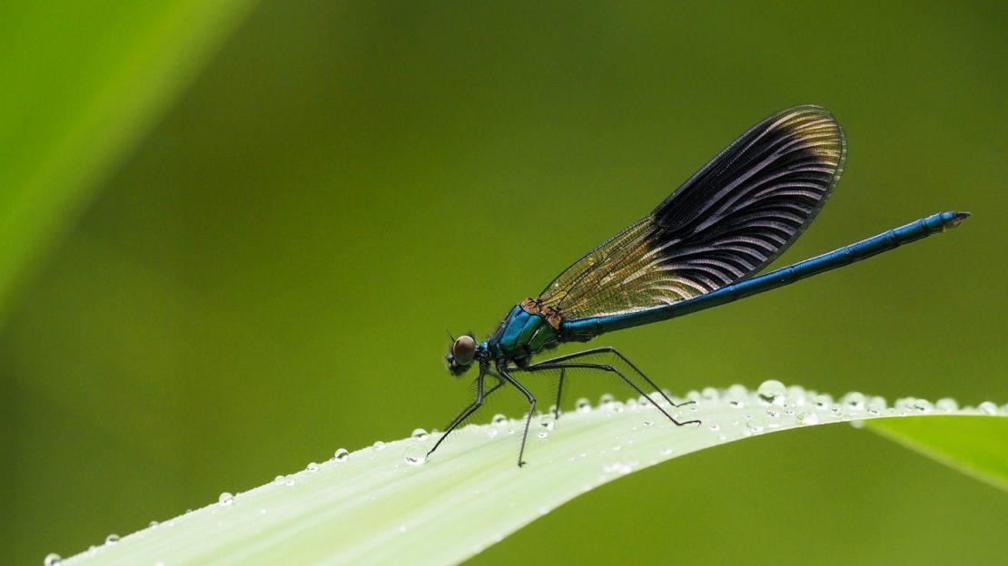Insekten und Käfer - Tiere am Teich bestimmen