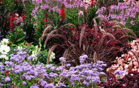 Dauerblüher um den Gartenteich