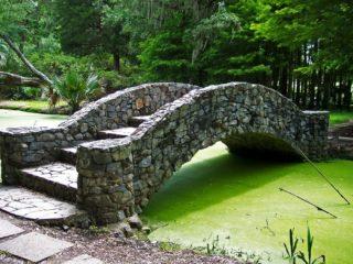 Schwebealgen im Teich