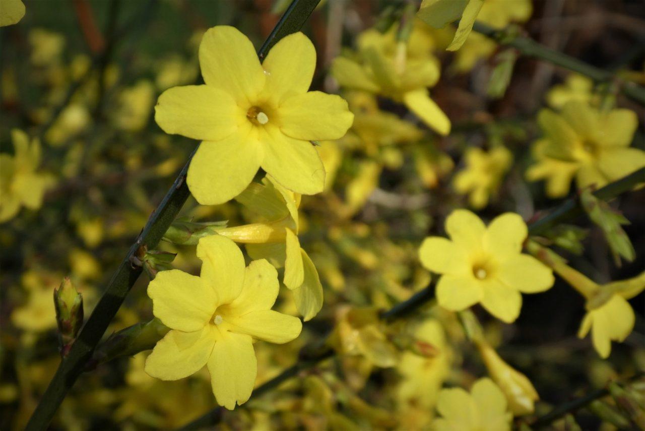 Blüten auch im Winter