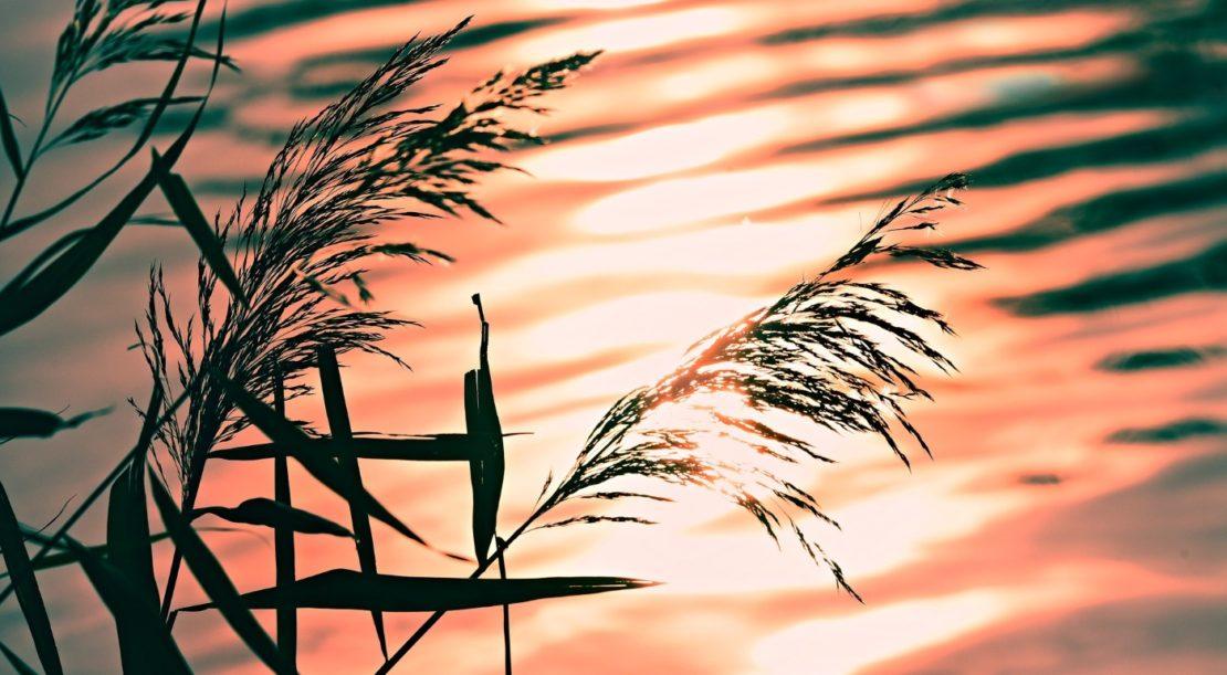 Teich im Herbst winterfest machen