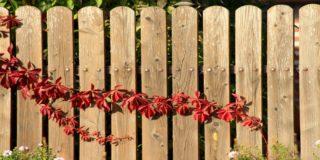 Zaun um den Gartenteich