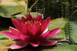Blumen am Teich