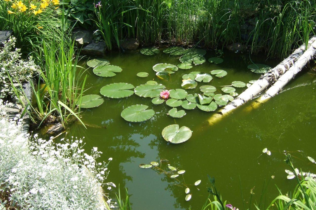 Natürliche Teichrandgestaltung