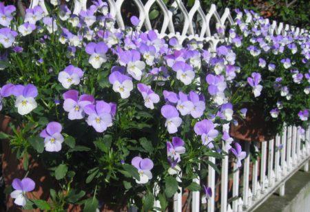 Bepflanzter Zaun