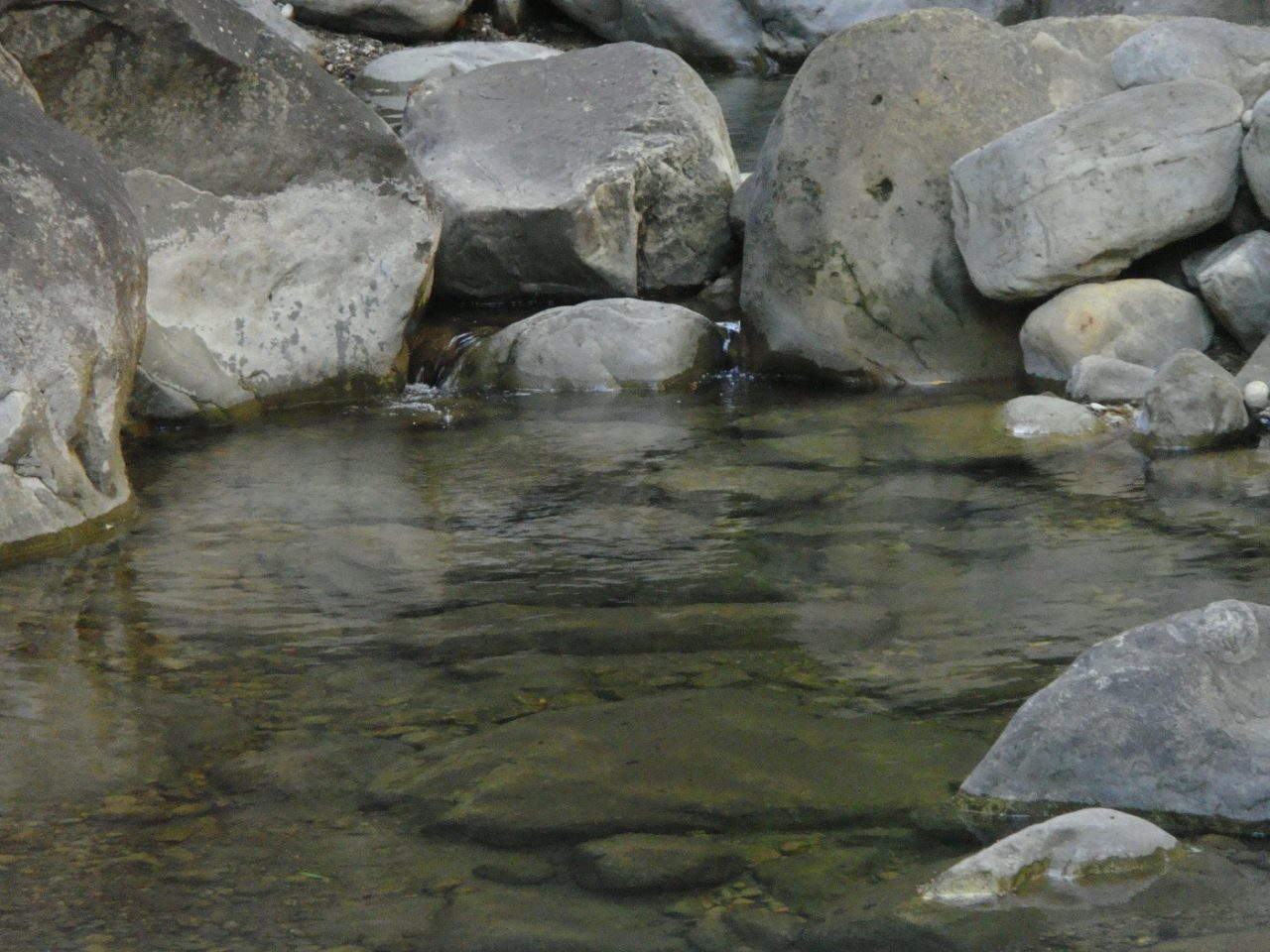 Wassergumpen am Bachlauf
